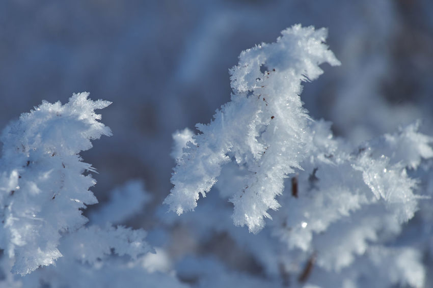 Ostern Erzgebirge SONY A7ii Beauty In Nature Branch Close-up Cold Temperature Day Focus On Foreground Fragility Freshness Frost Frozen Ice Ice Crystal Nature No People Ostern Ostern Im Schne Outdoors Sachsen Schneeberg Sky Snow Snowflake Tranquility Tree Weather White Color Winter
