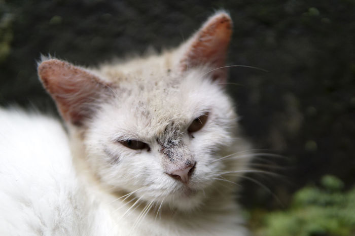 Animal Themes Cat Close-up Day Domestic Animals Domestic Cat Feline Indoors  Mammal Nature No People One Animal Pets Whisker