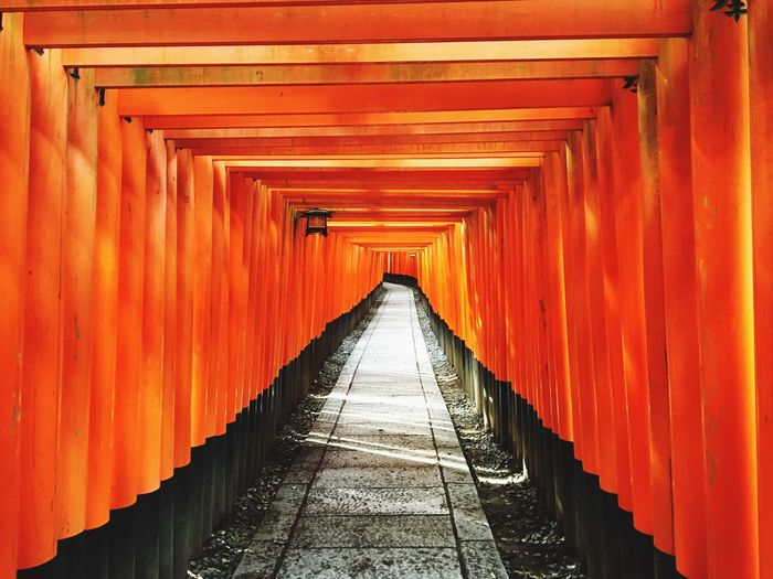 Torii Gates Leading Towards Shrine