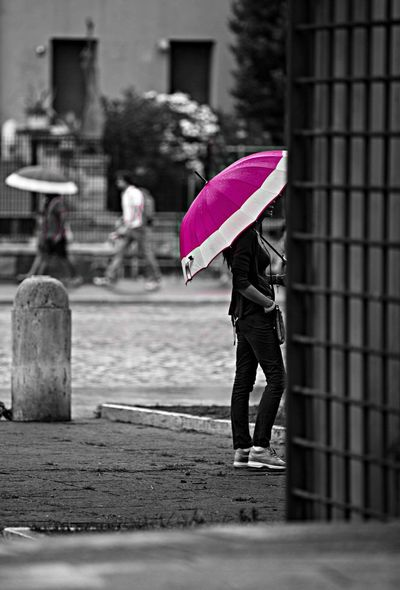 Umbrella Purple Blackandwhite Rome