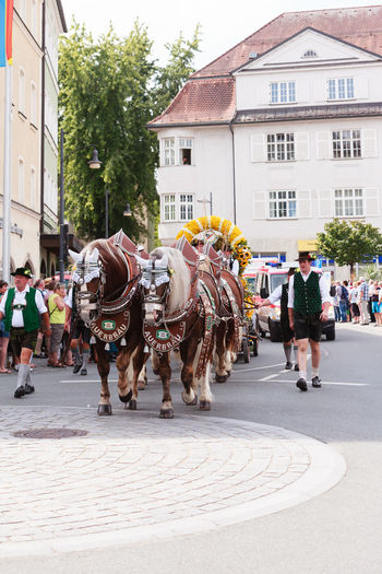 Rosenheim, Germany - September 4, 2016: horse team the AuerBräu brewery at Thanksgiving Parade in Rosenheim / Germany Autumn Festival Beer Beer Kegs Horses Machine Thanksgiving Architecture Brewery Building Exterior Built Structure City Day Domestic Animals Large Group Of People Mammal Men One Animal Outdoors Pageant Parade People Real People Rosenheim Sky Walking