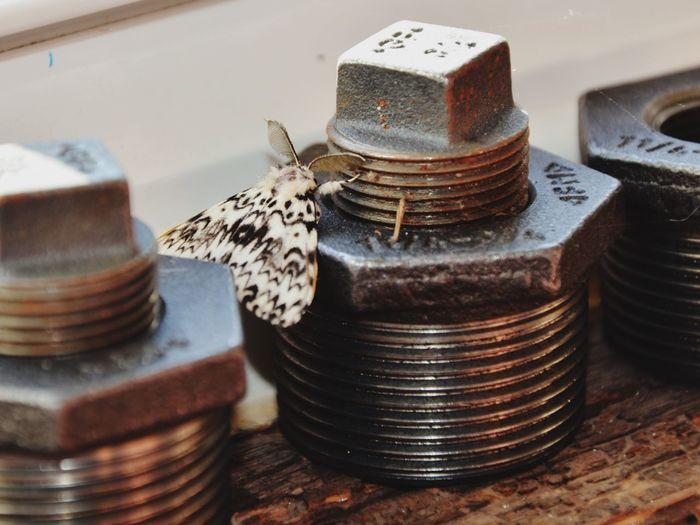 Moths Butterfly Butterflies Butterflies And Moths Rust Metal Bolt Nature Resting Taking Photos