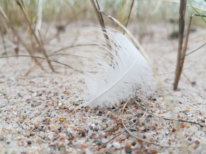 white feather at the beach White Feather White Atmosphere Beach Relax Peace Peaceful Sand Dune Beach Sand Feather  Peacock Feather Close-up Plant Life EyeEmNewHere Summer In The City My Best Travel Photo A New Beginning 50 Ways Of Seeing: Gratitude My Best Photo #NotYourCliche Love Letter