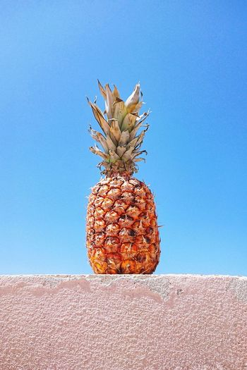 Ripe pineapple against blue sky Pineaple  Summertime Summer Fruit Food Sky Blue Sky Low Angle View Minimalism Abstract Natural Hello June Ripe One Object Outdoor Balcony Copy Space Desert Fruit Arid Climate Sky Close-up Succulent Plant Dried Fruit Juicy Abstract Backgrounds Cactus