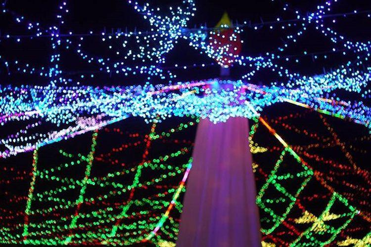 Oldlens GF2 Lumix Panasonic  Pentax Pentaxlens 50mmf2 Lumixgf2 Iluminación Cristmastree Candletree 日本夜景遺産 ライトアップ夜景遺産 周南冬のツリーまつり 青空公園 イルミネーション キャンドルツリー ルミックスgf2 ルミックス オールドレンズ オールドレンズ部 カメラ好きな人と繋がりたい 写真好きな人と繋がりたい ファインダー越しの私の世界 ミラーレス カメラ好き ペンタックス ペンタックスレンズ