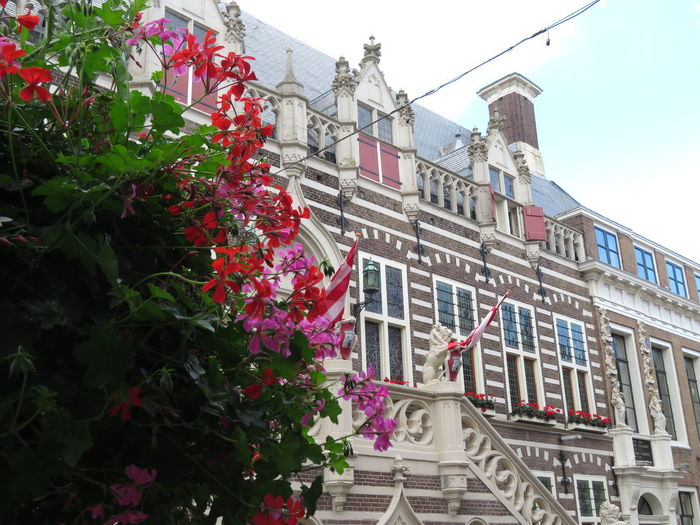 Alkmaar town hall Alkmaar October Built Structure Building Exterior Architecture Flower Flowering Plant Plant Building Growth Nature Day Residential District Low Angle View No People Freshness City Outdoors Fragility Vulnerability  Pink Color EyeEm Best Shots EyeEm Gallery EyeEm Here