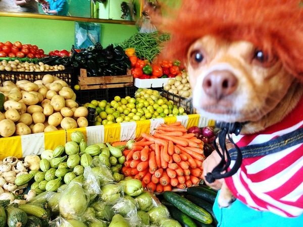 Chuky Dia De Los Muertos Pets Dog Fruit Food Vegetable Business Finance And Industry Domestic Animals Indoors  Freshness Healthy Eating No People Animal Themes Mammal Day Petal Fragility