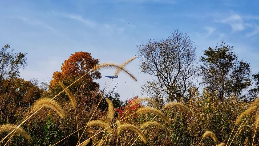 A beautiful autumn day Flaying Trees And Nature Airplane Tree Sky Plant Life Growing In Bloom Botany