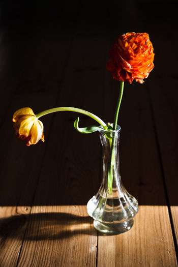 Close-up of wilted rose in vase on table