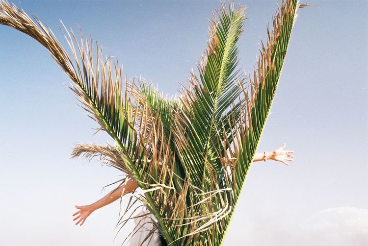 Woman standing against palm tree