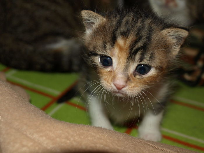 Big Eyes Kitten Babycat Baby Bigeyes👀 Pets Domestic Animals Animal One Animal Animal Themes Whisker Looking At Camera Cute Portrait Close-up Indoors  No People Feline Mammal Day