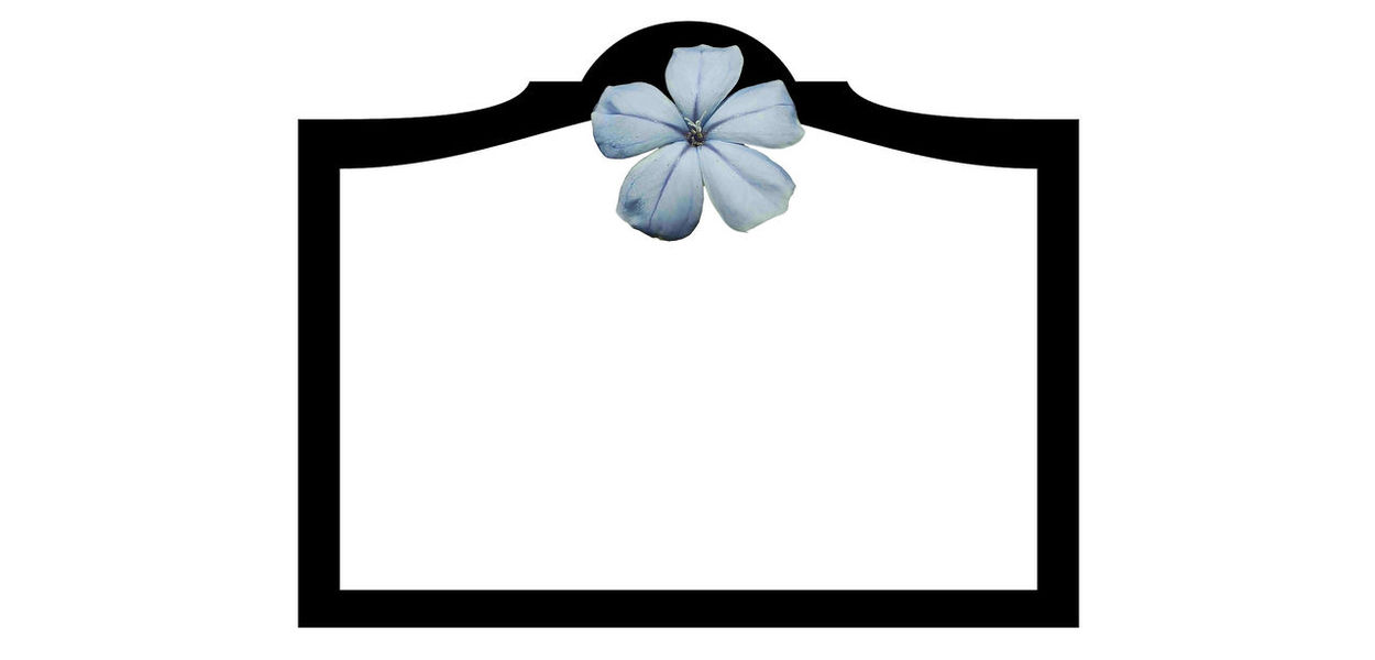 """Sharon's """"Ready for Caption"""" Ready For Logo Ready For Caption Sharons_snapshots Sharon's Ready For Caption Plumbago Caption Logo Text Box Advertising Canvas Stationary White Background Fashion Picture Frame Frame Photo Album"""