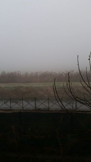 Countryside Pianurapadana Bereguardo Lombardia Italy Fog Sky Nature Environment Water Copy Space Tranquility Fence Landscape Beauty In Nature Field Scenics - Nature Barrier Day Tranquil Scene Plant Boundary Outdoors
