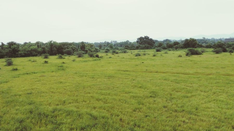 Monsoon After The Rain City Outskirts Vangaon Maharashtra India Greenery Beautiful Nature Honor4x Tree Grass Landscape Sky Field Scenics Green Color Grassy Nature Beauty In Nature Non-urban Scene Rural Scene Cloud Growth Tranquility