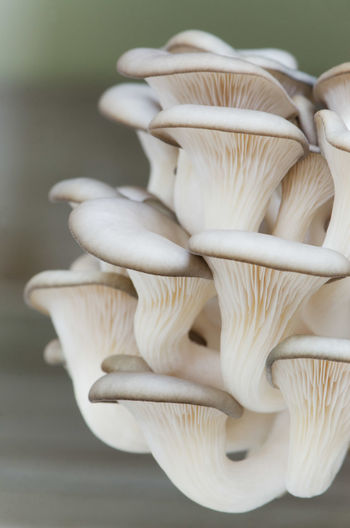Close-up of white mushrooms