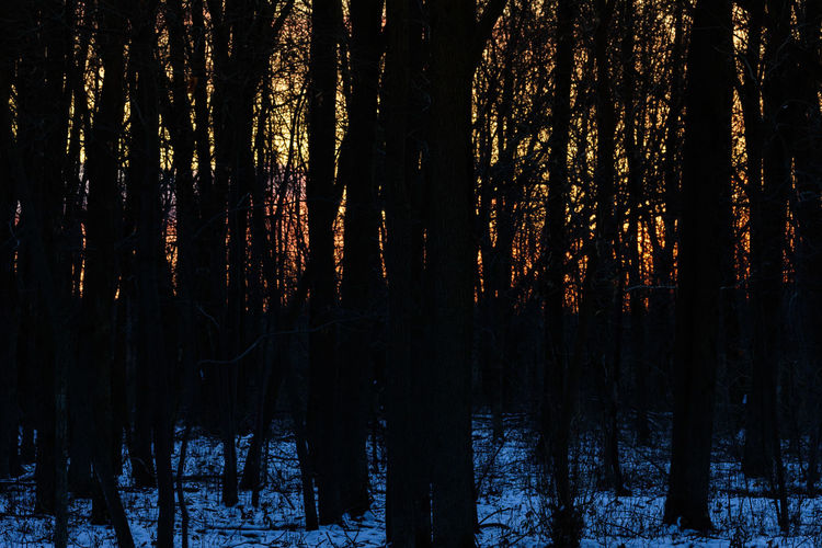 Forest Hightlight Landscape Late Afternoon Light Late Afternoon Natural Light Nature Outdoors Shadow Sky Snow Sunset Taking Photos Trees Winter Winter Landscape Winterscapes