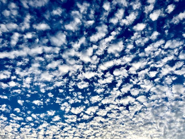 Sea of clouds Cloud - Sky Sky Full Frame Blue Low Angle View Backgrounds Visual Creativity Beauty In Nature No People Day Scenics - Nature Nature Tranquility Tranquil Scene Outdoors Abstract Meteorology Cloudscape White Color