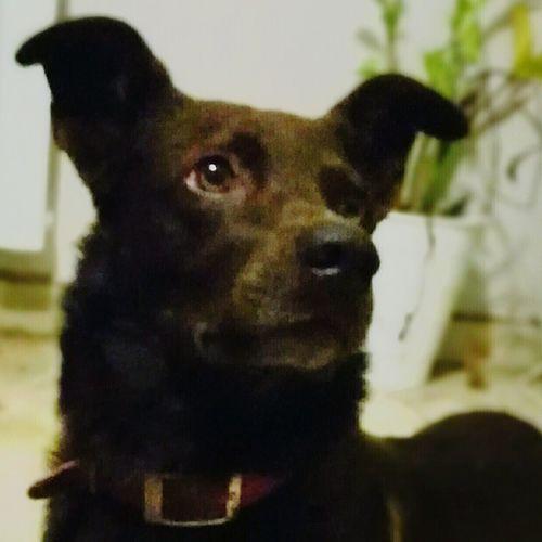 Dog Love Hometime Friend