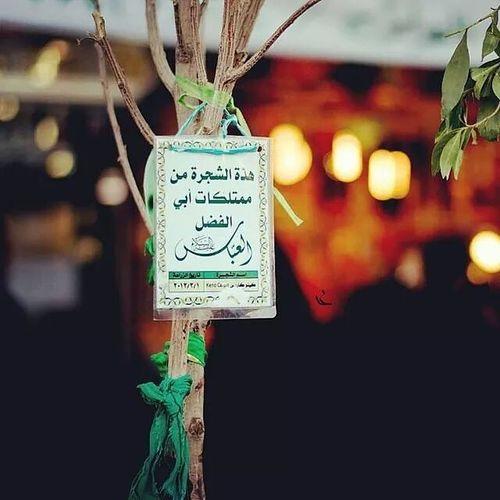 هذه الشجرة من ممتلكات أبا_الفضل ❤♥♡∞ Taken by: ali bazzi