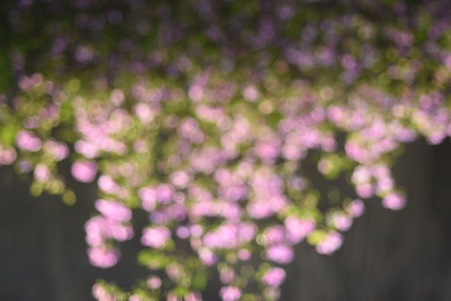 Background Beauty In Nature Blooming Blur Bokeh Bokeh Photography Close-up Day Dot Dot Dot Flower Flower Head Fragility Freshness Growth Nature No People Outdoors Pink Flower