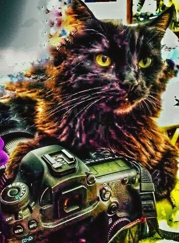 Welcome To Black nlack cat with long hair One Animal Animal Themes Pets No People Mammal Domestic Animals Close-up Outdoors Day Black Cat Photography Looking At Camera Black Cat Collection Special Effects