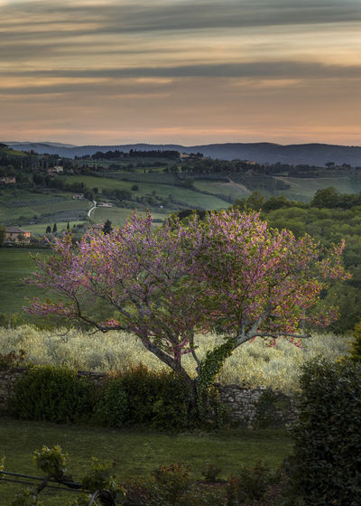 good night Toscana Tuscany Tuscany Countryside Beauty In Nature Cloud - Sky Environment Field Flower Flowering Plant Grass Growth Land Landscape Nature No People Outdoors Plant Scenics - Nature Sky Sunset Tranquil Scene Tranquility Tree Tuscany Italy Water