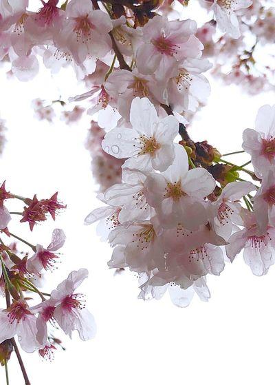 RainDrop Flower