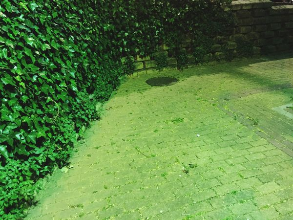 Building Exterior Green Color Grass Plant Growth No People Nature Outdoors Day Beauty In Nature