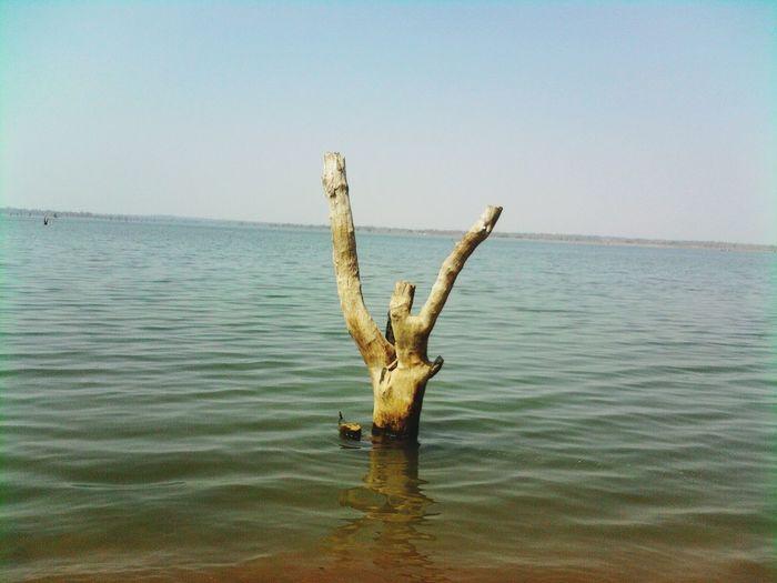 Dead tree in water against clear sky