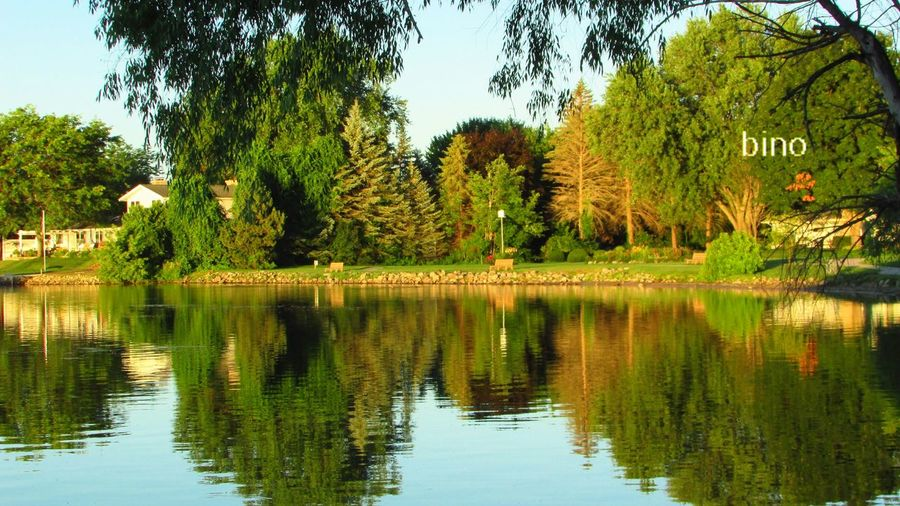Early Morning Light So Pretty!  Around The Lake Shoreline Idyllic Scenery Just Me Reflection Perfection  Green Color So Cool Lake Cadillac Pure Michigan