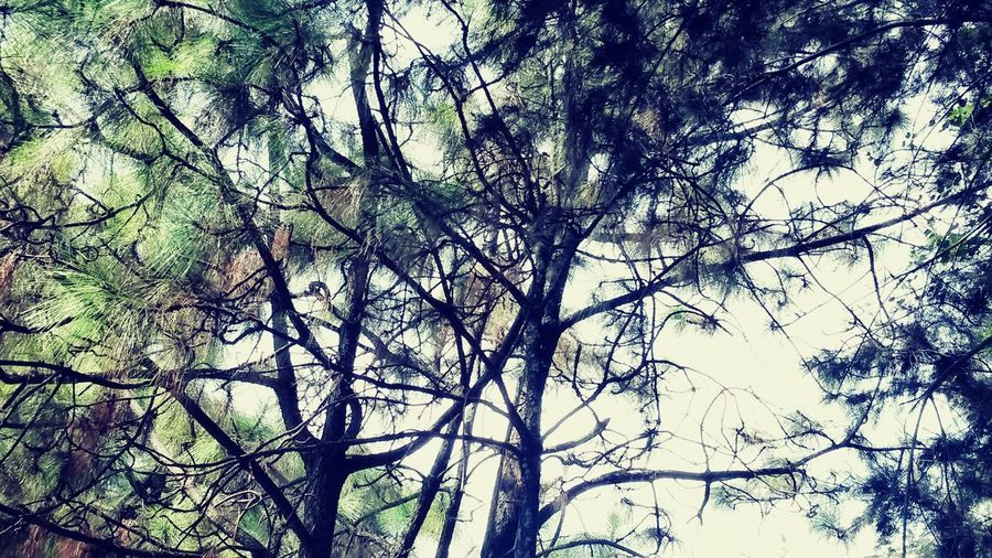 Hugging Trees Abstract Branches EyeEm Nature Lover Nature Photography ...Have a great day everyone! ♡