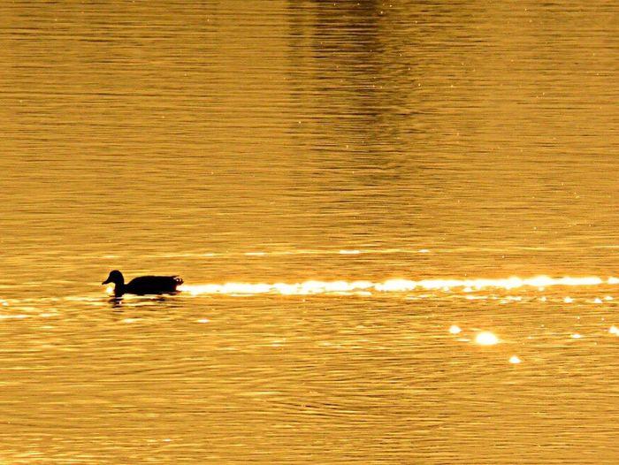 Bird Enjoying The Sun Birds Bird Photography Birdwatching Birds_collection Birds Of EyeEm  Bird Watching Birds🐦⛅ Sea Seaside Sunset Sunset_collection Light Sunlight Light And Shadow