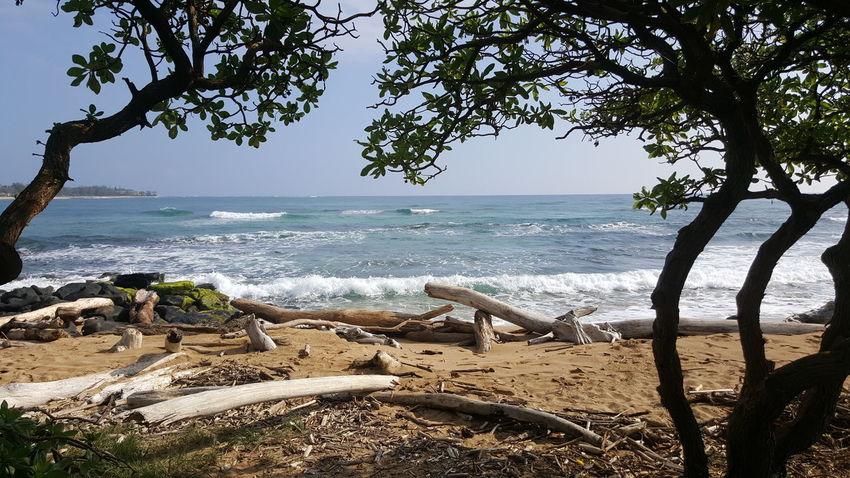 Beach Horizon Over Water Sand Wave Beauty In Nature Outdoors Serenity And Nature Lydgate Beach Kauai Life