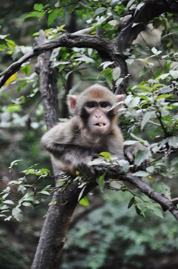 Portrait of monkey on tree in forest