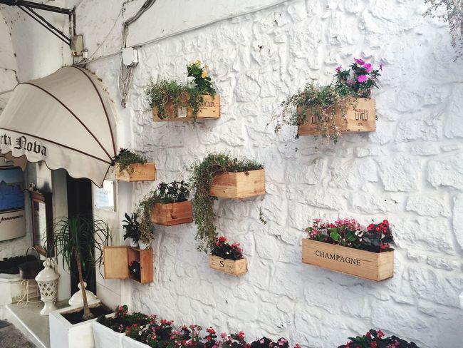 Cartolina Flower No People Architecture Beauty In Nature Vacanze Puglia