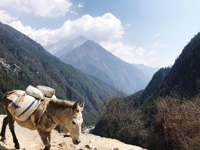 Donkey carrying sacks while walking on mountain