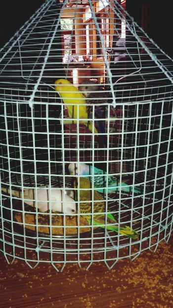 Five Birds five days @patiala home feeding with grains and water. . After this flight of freedom