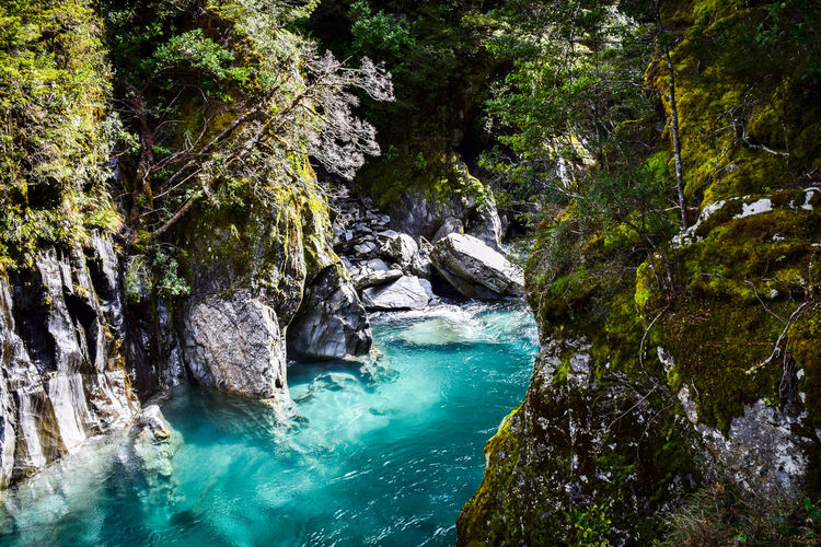 Amazing blue pools in New Zealand, the water really is that colour! Breathtaking. EyeEm Nature Lover New Zealand Beauty No Filter Pools  Beauty In Nature Blue Day Flowing Flowing Water Nature No People Non-urban Scene Outdoors Plant Rainforest Rock Rock - Object Rock Formation Scenics - Nature Solid Tranquil Scene Tranquility Tree Turquoise Colored Water