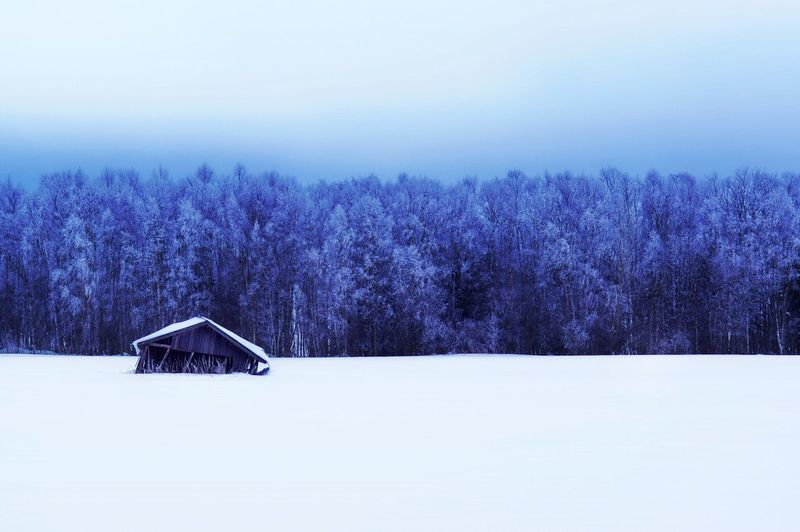 Damaged Barn On Snow Covered Field By Trees Against Sky