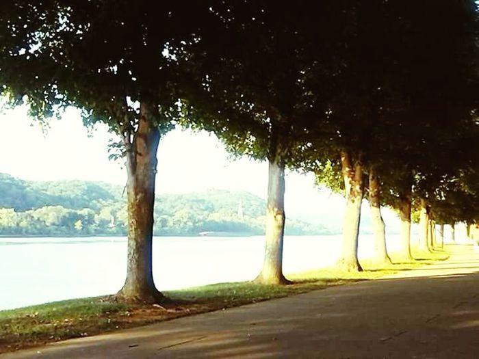 Tree Sea Nature