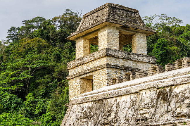 Tower in the palace at the Mayan ruins of Palenque Ancient Archeology Building Chiapas Forest Heritage History Jungle Maya Mayan Mayan Ruins Mexico Nature Old Outdoors Palenque Palenque, Chiapas Precolumbian Pyramid Religion Ruin Stairs Stone Temple Unesco
