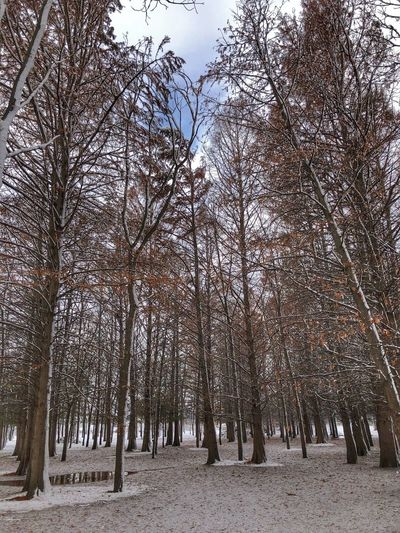 Trees in the forest Nature_collection Nature Photography EyeEm Nature Lover Tree Plant Nature Growth No People Sky Day Snow Beauty In Nature Low Angle View Cold Temperature Land Environment Tranquility Winter Outdoors Coniferous Tree Non-urban Scene Pinaceae Pine Tree
