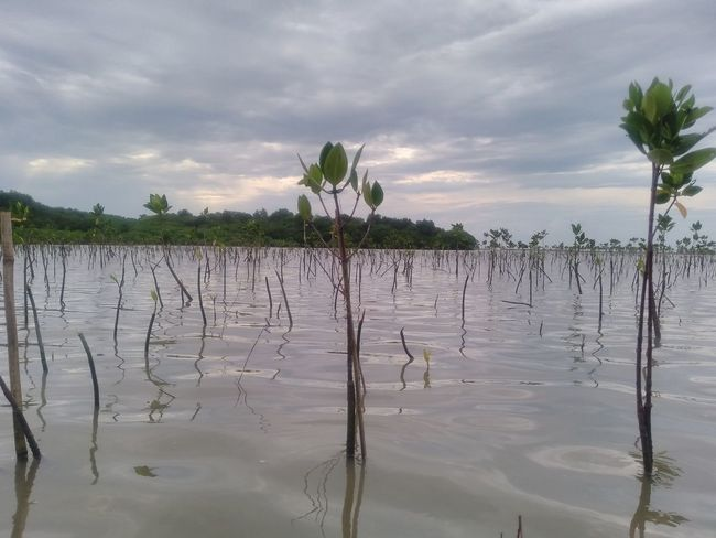 Nature Plant Water Cloudy Mangrove