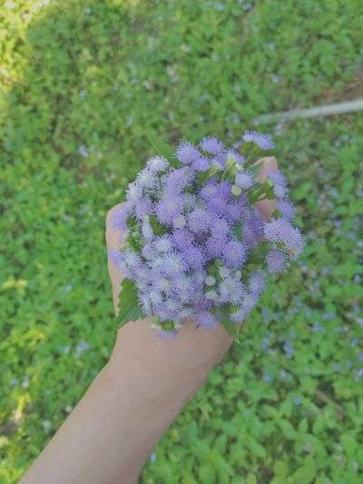 Close-up of cropped hand holding flower