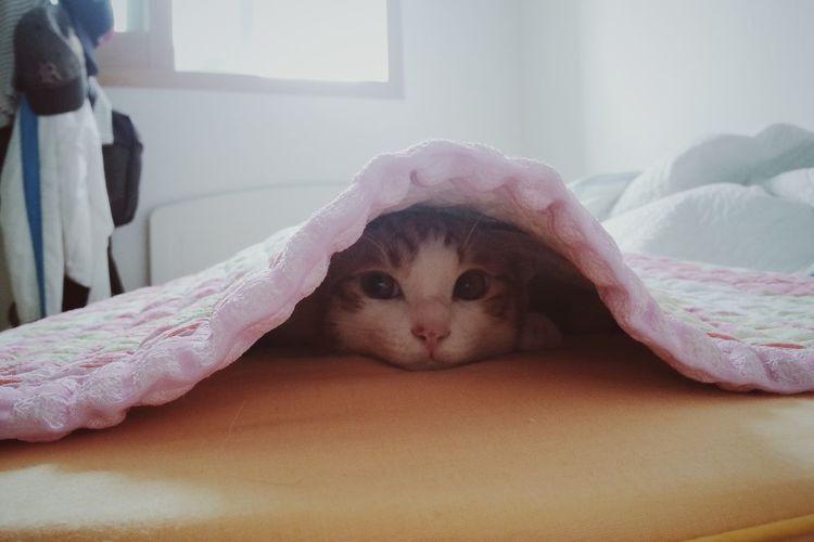 Cat Cat Watching