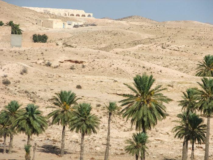 Palm trees on desert land