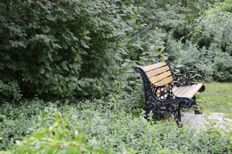 Have a seat. Tree Grass Plant Green Color Park Bench Wooden Park Green Grassland Bench Countryside Greenery