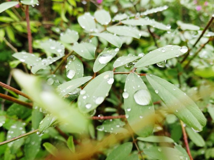 Water Leaf RainDrop Drop Wet Purity Close-up Plant Green Color