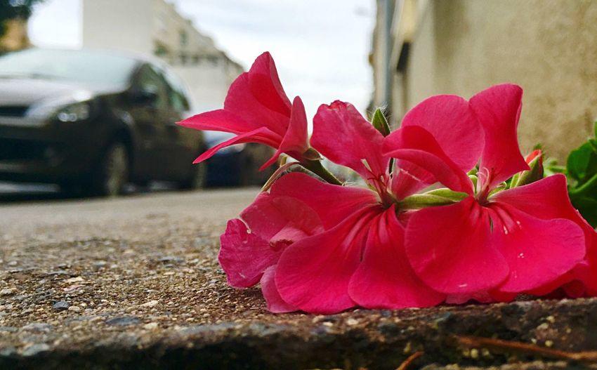 Taking Photos Streetphotography Urbanphotography Flower IOS 8