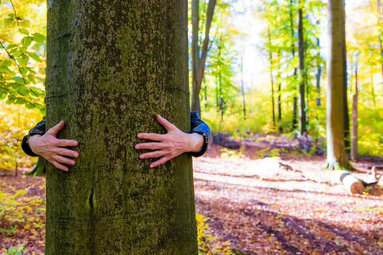 Cropped hands of person embracing tree trunk in forest